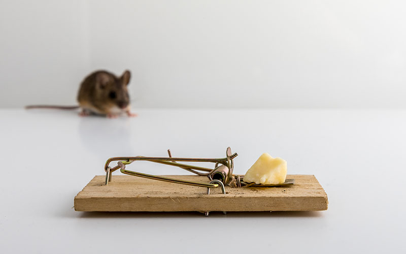 Mouse Trap Set Up in House